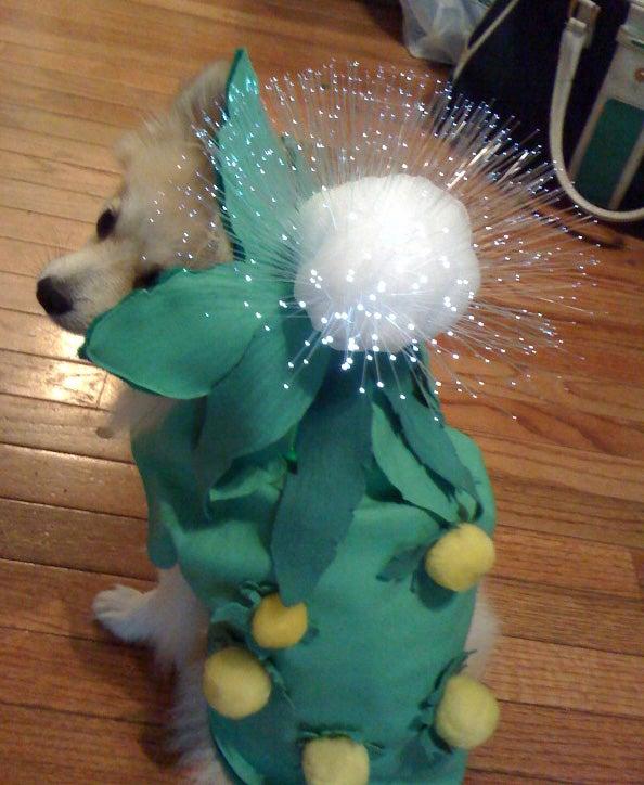 Light-Up Dandelion Doggy Costume