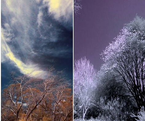 Full Spectrum/IR Camera Conversion, Canon Sx50