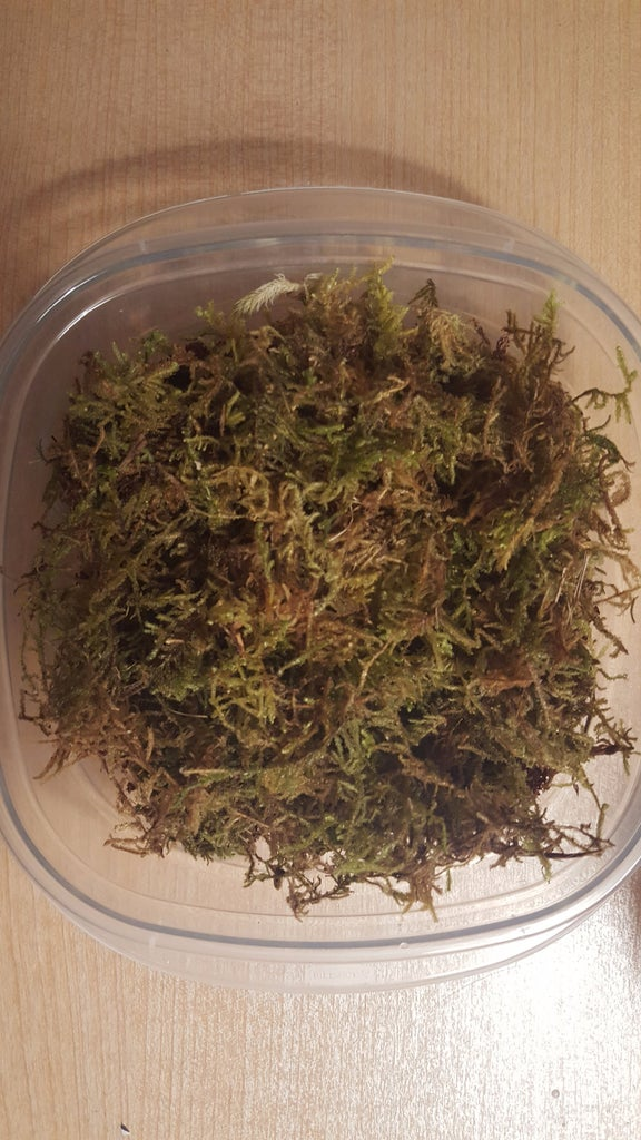 Add Substrate and Sphagnum Moss