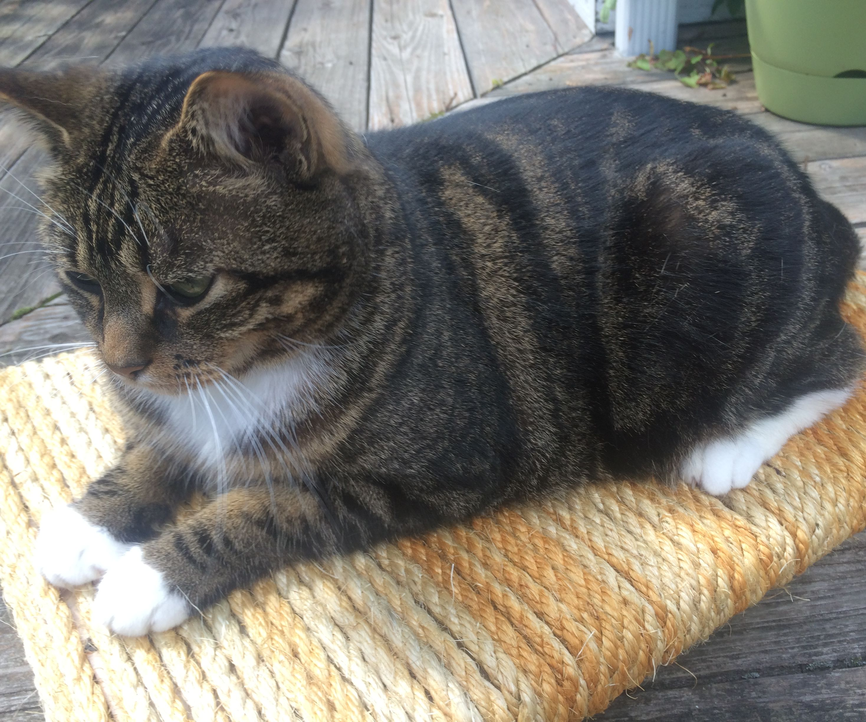 Heavy Duty Sisal Cat Scratcher