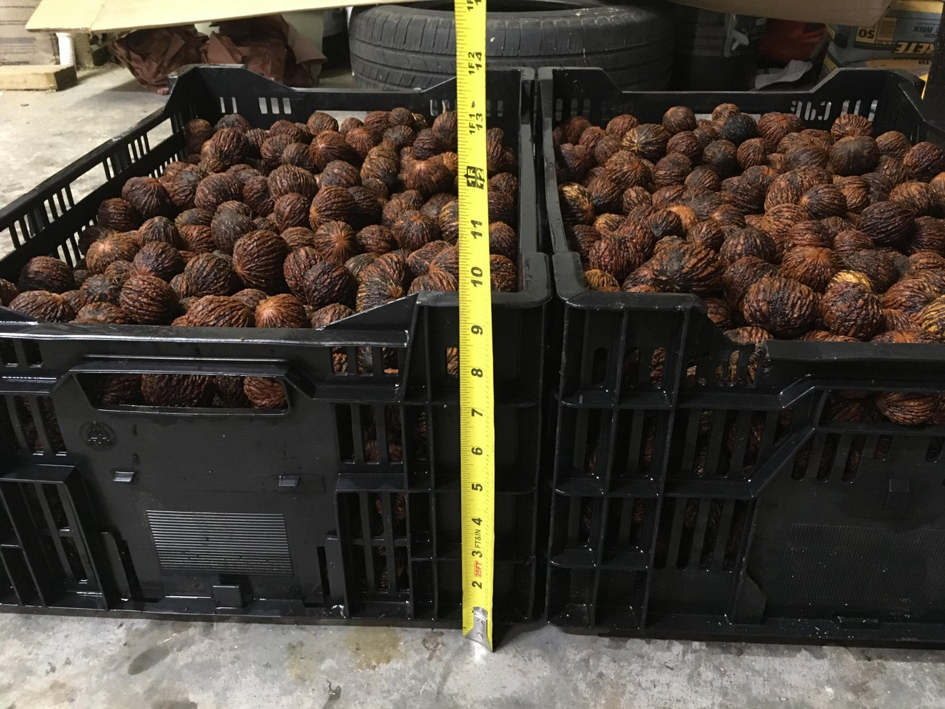 Nuts From New Huller