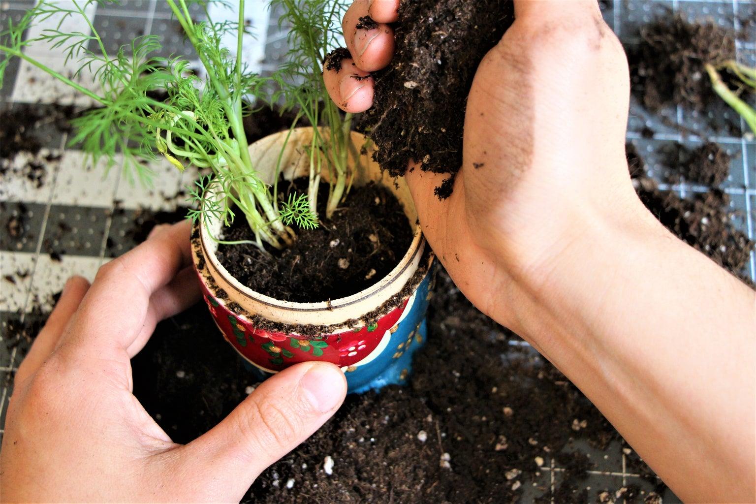 Trans-Planting