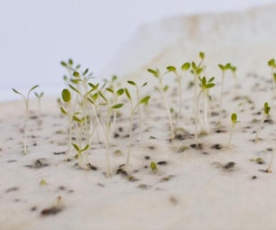 PLANTABLE HANDMADE FELT / FIELTRO ARTESANAL PLANTABLE