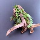 Cedar Driftwood Planter