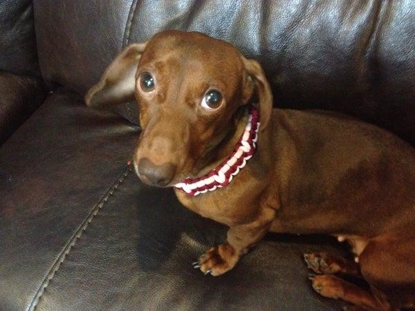 Glow in the Dark Dog Collar