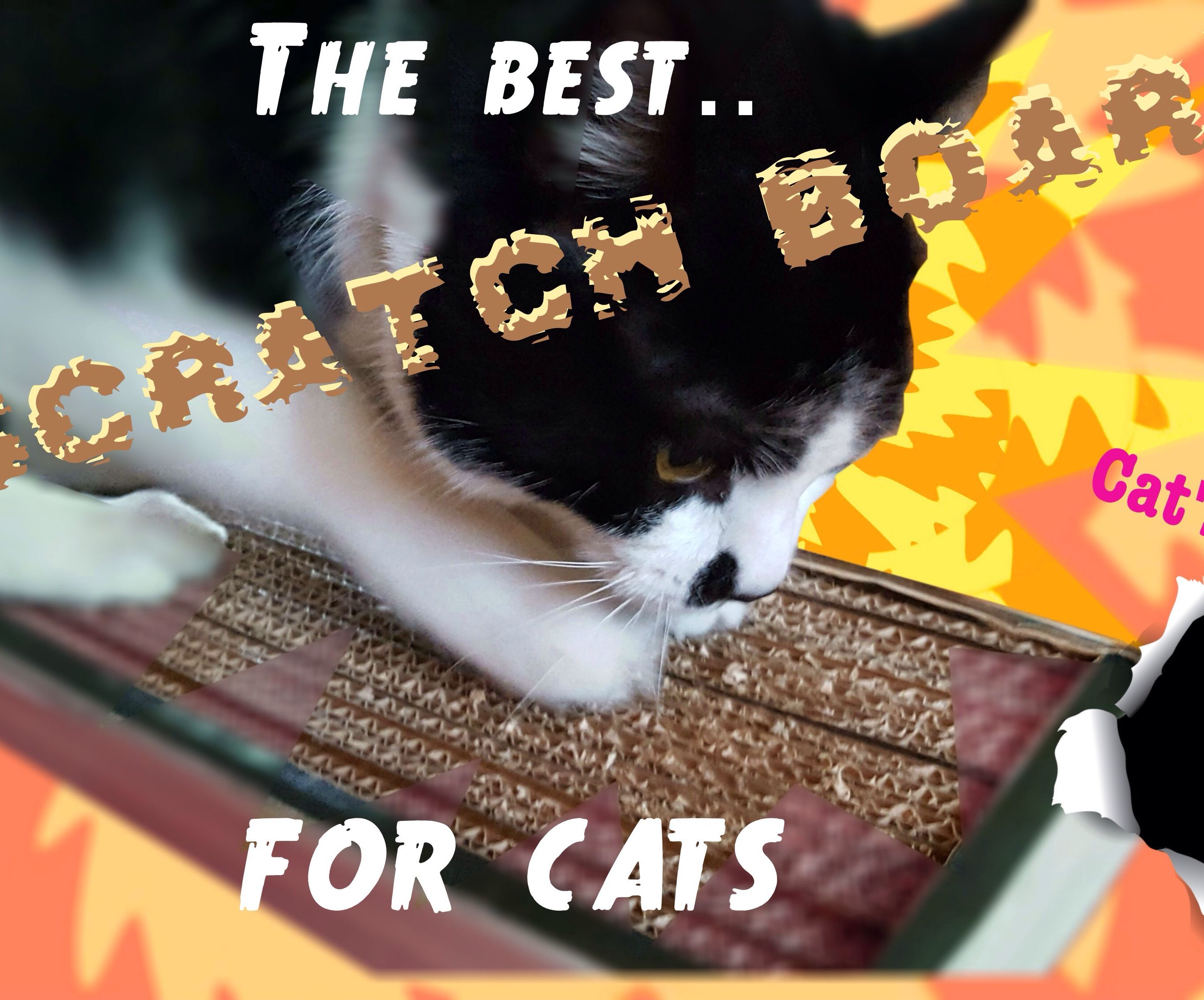The Best Scratch Board For Cats