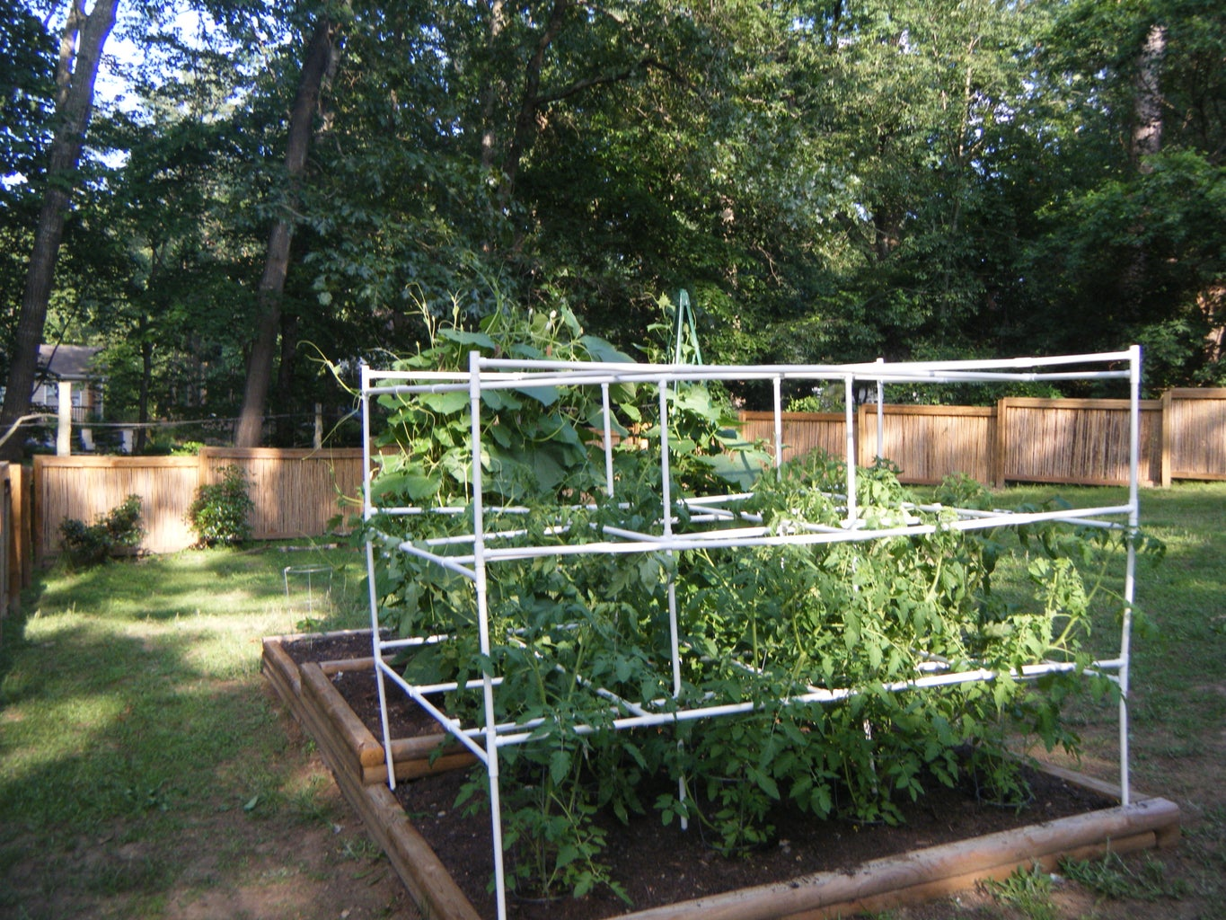 Tomato Cage With PVC