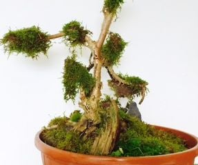 Faux Bonsai With Moss (under 3$ and Maintainance Free)