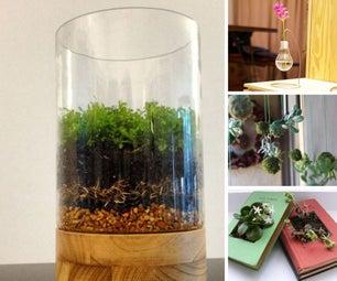 Plant Things