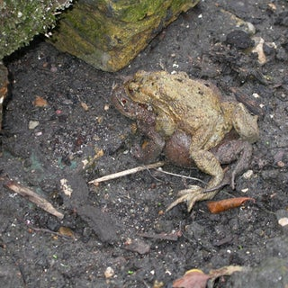 our_friendly_toads.jpg