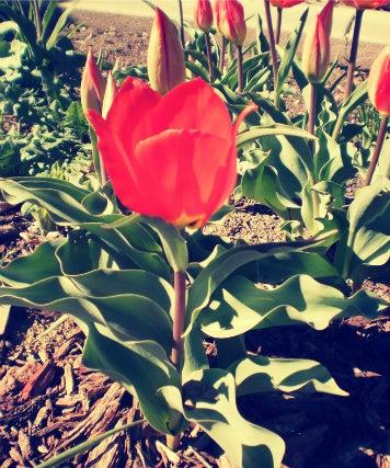 Flora Life