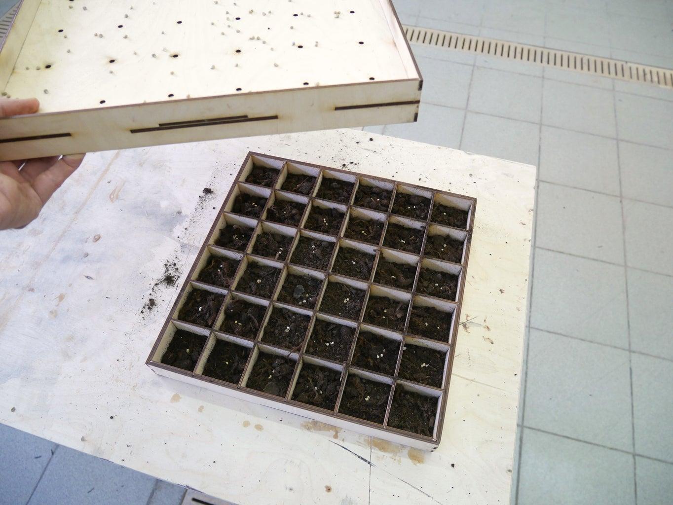 Seedling System