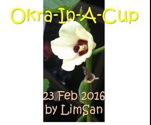 Okra-In-A-Cup