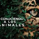 Conociendo a Los Animales