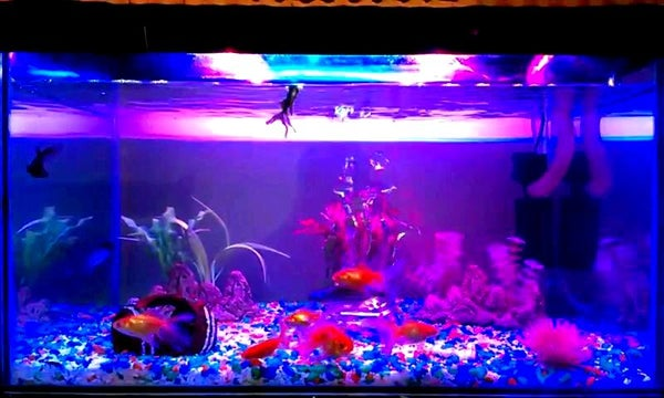 Aquarium LED Lighting || High Intensity || Enhance Fish Colour