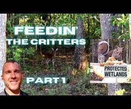 用食物吸引当地野生动物