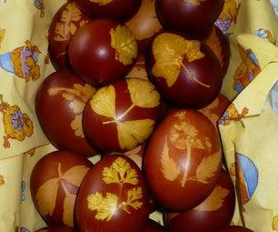 Bio Coloured Eggs