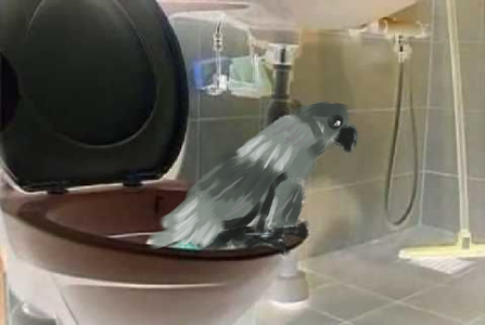 How to Potty Train Your Pet Bird