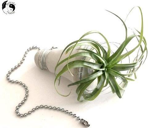How to Make a Lightbulb Planter From Plastic Packaging!