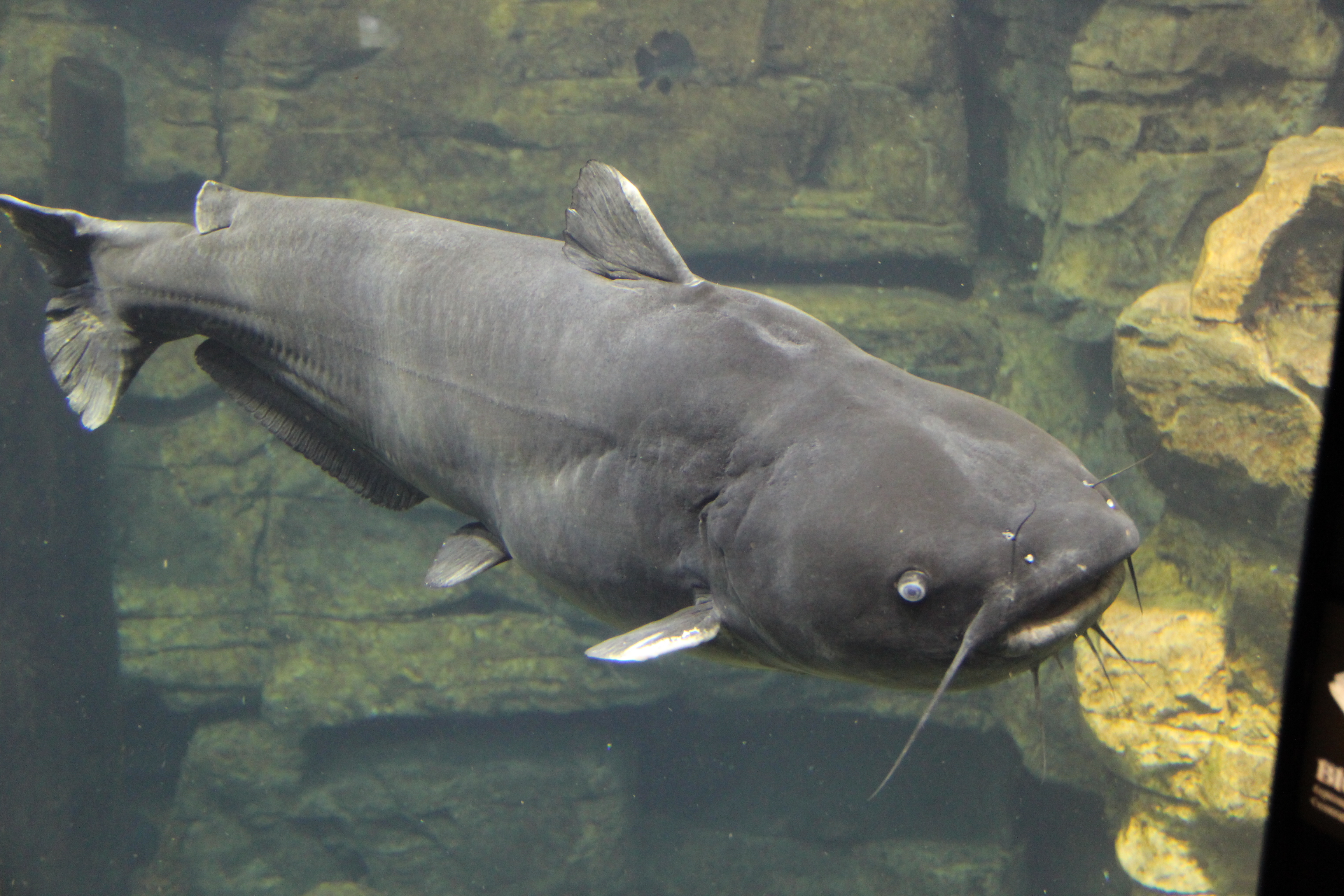 Ultimate Catfish Bait.