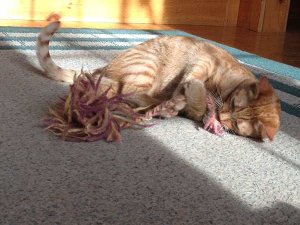 Felted Cat Toy - Easy, Free, No Knitting Required