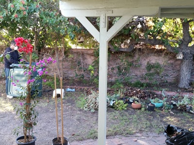 Trim Trees, Kill Weeds, and Rake