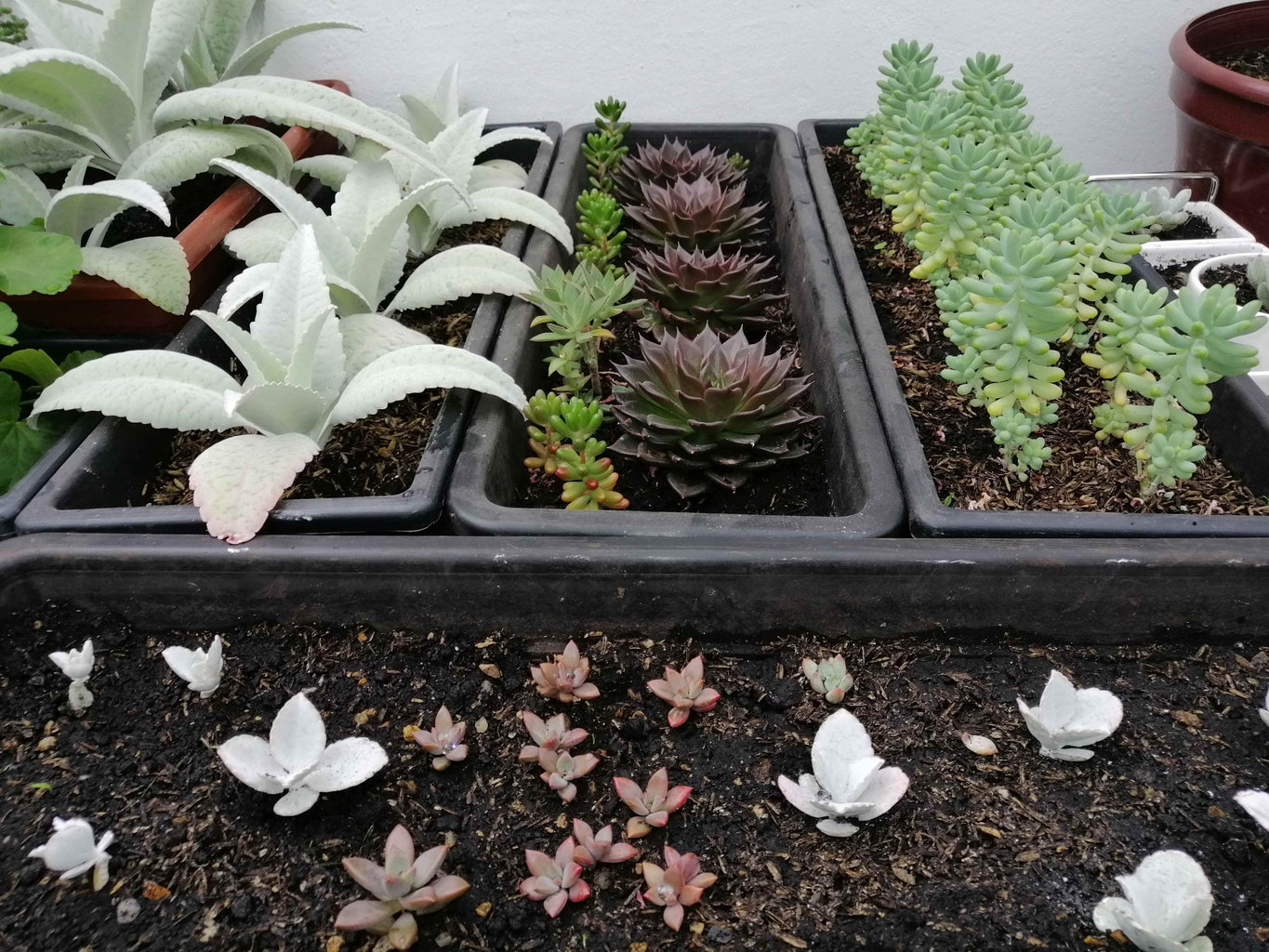Selection of Succulents and Disposition of the First Elements