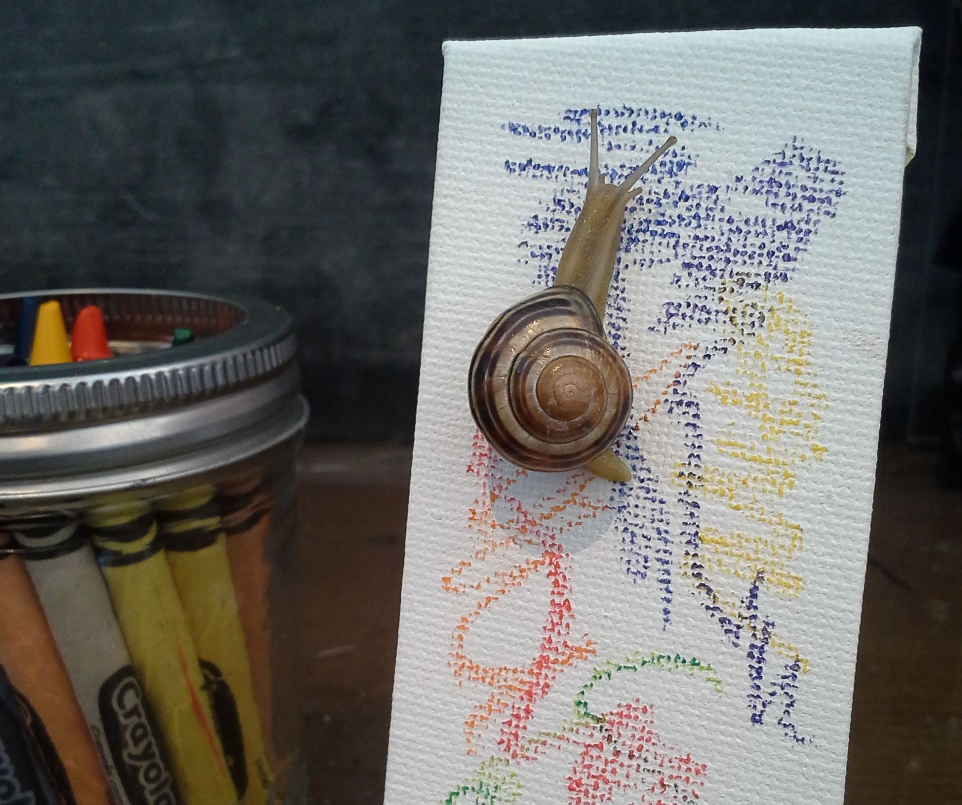 Snail Art: Making Art With Snails
