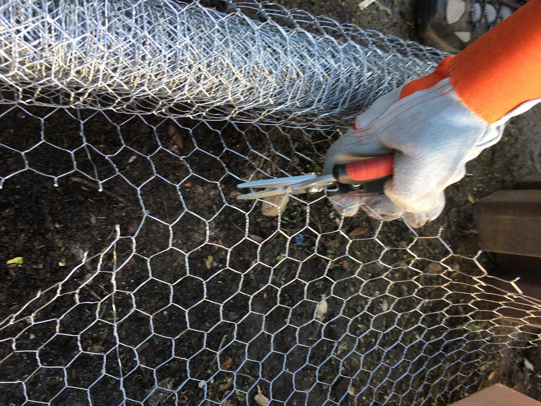 Layer in Chicken Wire