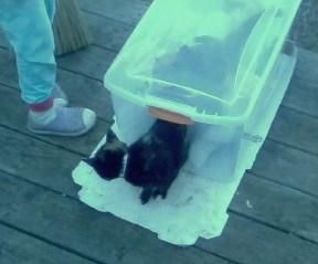 Inexpensive cat sleeping hutch
