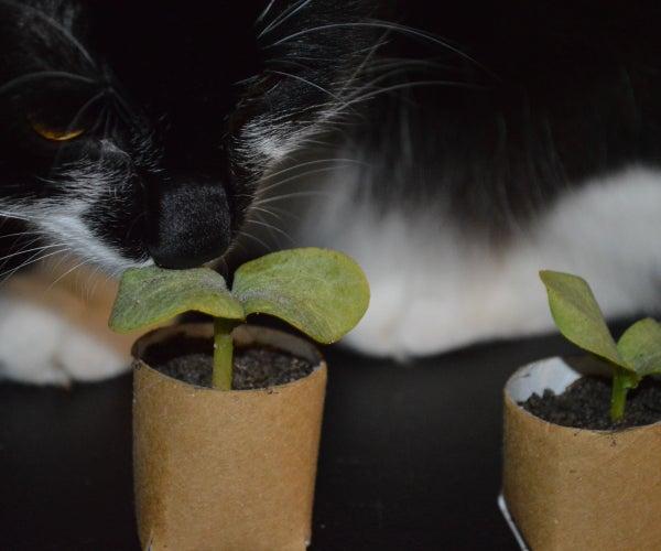 Biodegradable, Free, Toilet Roll Seedling Starters