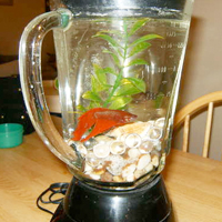 Blender Fish Tank