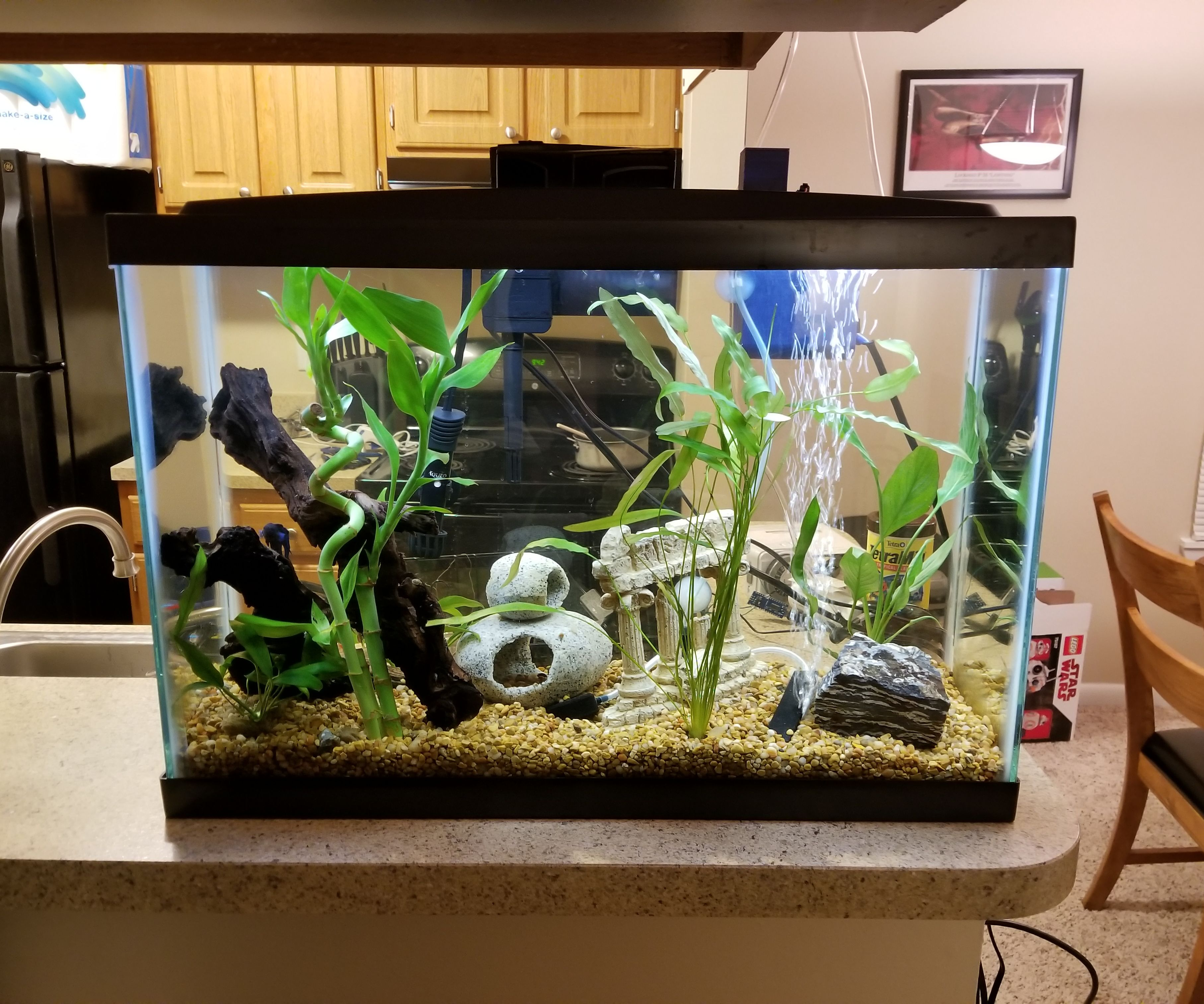 The Ultimate DIY Automatic Fish Feeder: Tier 1