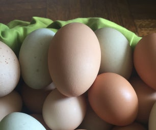"""如何获得""""免费""""鸡蛋"""