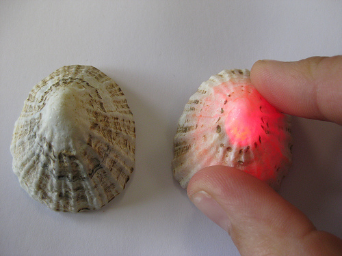 Limpet Push-Button