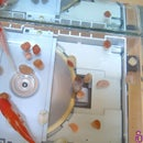 Fish Tank CD Player
