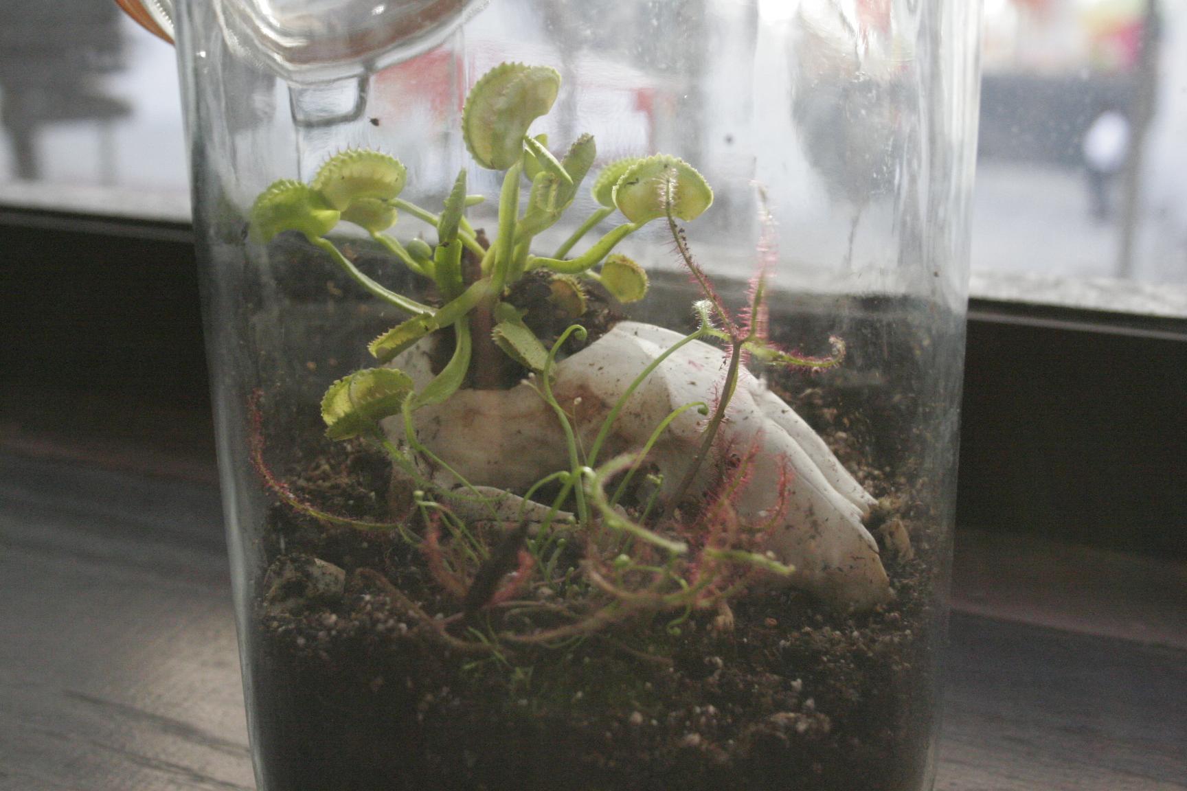 Potting soil for carnivorous plants