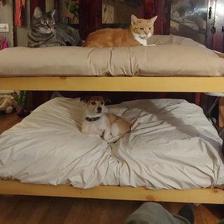 DIY Dog Bunk Beds