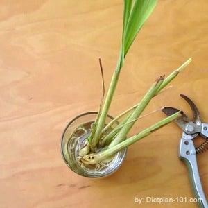 Propagate and Plant