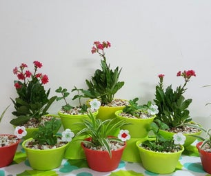 DIY Cute 'N' Little Indoor Plants