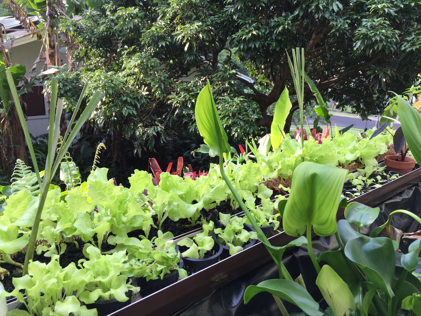 Transplanting and Arranging the Plants