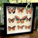 Orange Themed (fake) Butterfly Collection