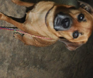 Paracord Stretchable Dog Leash