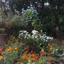 Garden Pyramid Trellis