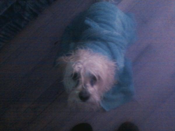 Pet Towel Robe
