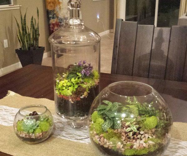 Beautiful Succulent Terrarium in Minutes.