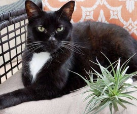 Let's Talk Toxicity & Houseplants; Plus Safe Choices for Cats & Dogs