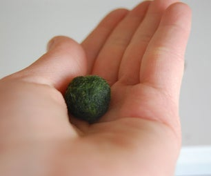 How to Take Care of Marimo Balls.