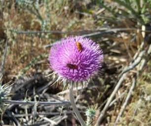 How to Explore Arizona for Beautiful Flowers