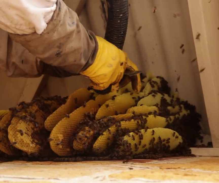 How to Build a Bee Vacuum